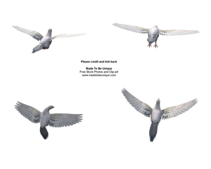 Different dove flying poses