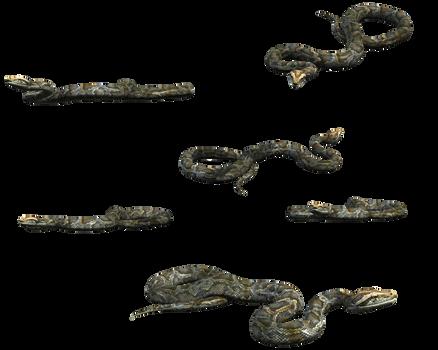 Python Snake FREE transparent