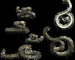Curling Snake 3d Stock snakes