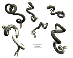 Hanging Python Snake Realistic