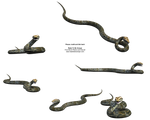 Realistic 3d Python Snake Stck