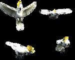 Lesser Citron Crested Cockatoo