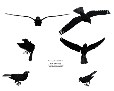Free Stock Flying Black Raven