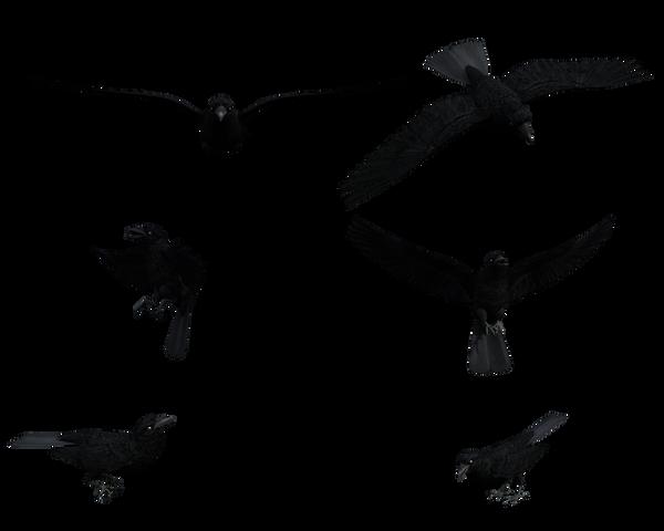 Ravens flying wallpaper - photo#27