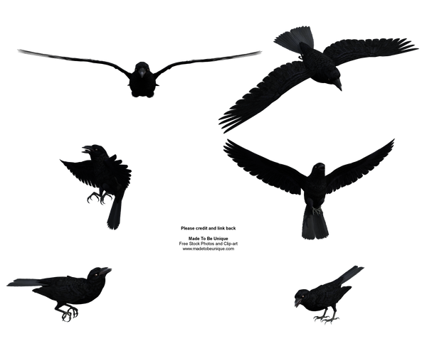 Free Stock Flying Black Raven by madetobeunique