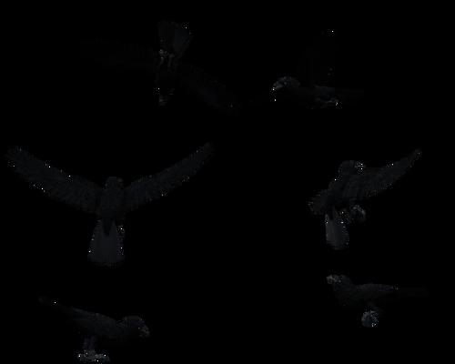 Black Raven Bird Flying Above