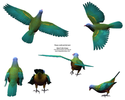 Flying Colorful Wompoo Dove