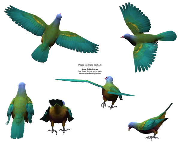 Flying Colorful Wompoo Dove by madetobeunique