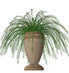 Fern plant stock in pot vase