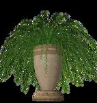 Fern plant stock in pot vase