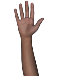 Free Stock Images Body Parts #2b hand n arm