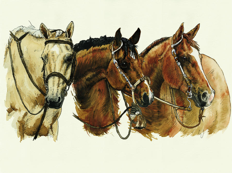 Western Horses Pictures Western Horses by