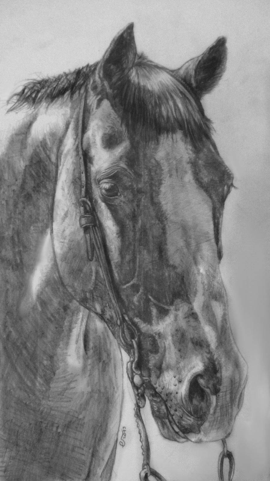 Quarter horse drawing - photo#25