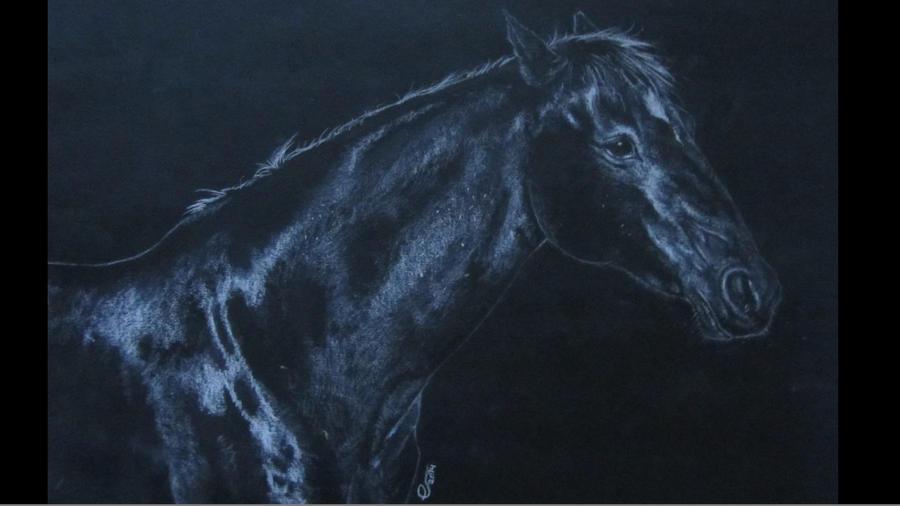 Black Horse drawing by IncredibleNacho