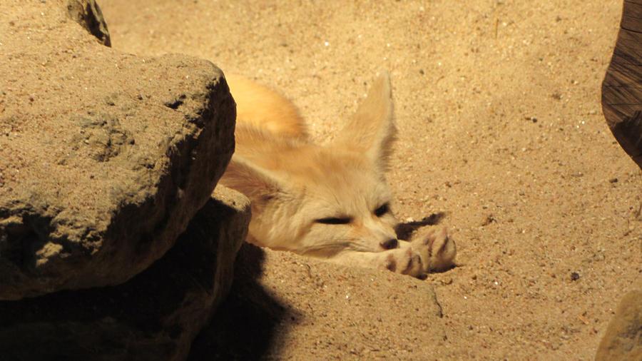 Fennec fox by IncredibleNacho