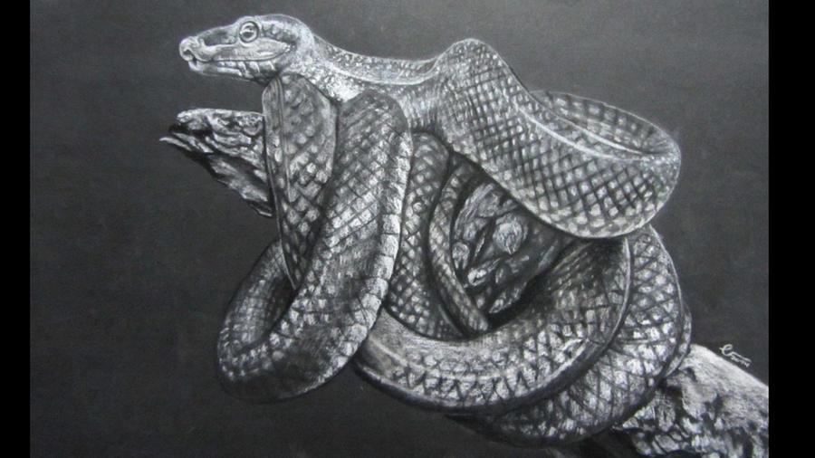 Snake drawing by IncredibleNacho