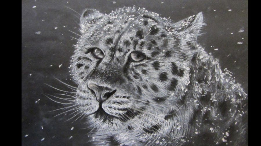 Snowleopard drawing by IncredibleNacho