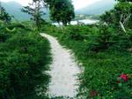 Rainforest Pathway Stock