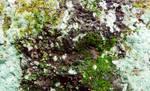 Texture (9)