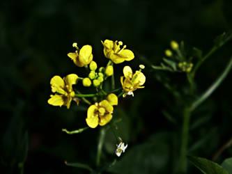 yellow flowers by ZoAr4