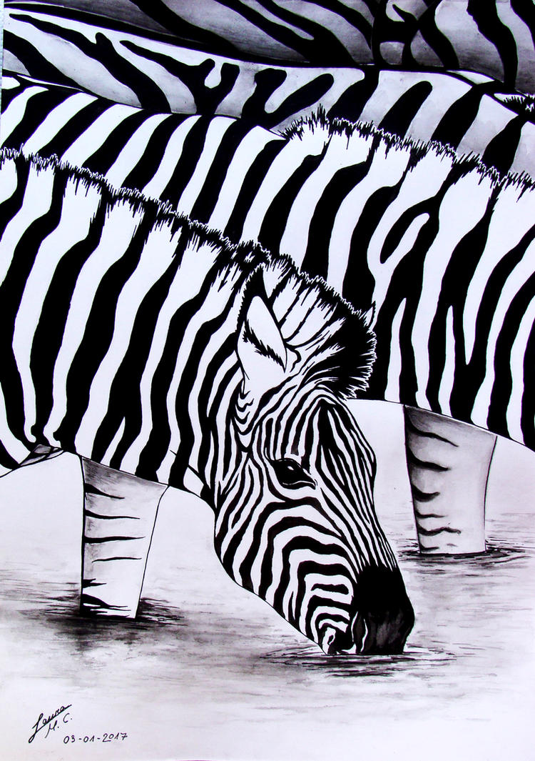 Zebra bevent al riu by arualmk