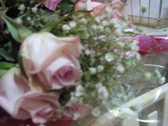 rose1 by sampsons-princess