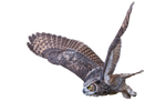 Owl by Mysticalsnowwolf