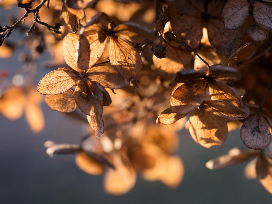 Beautiful Remnants by Pythiadelphie
