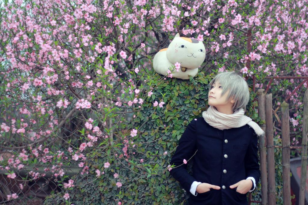 Natsume Yujin Cho_cherry blossom by Dan-Gyokuei