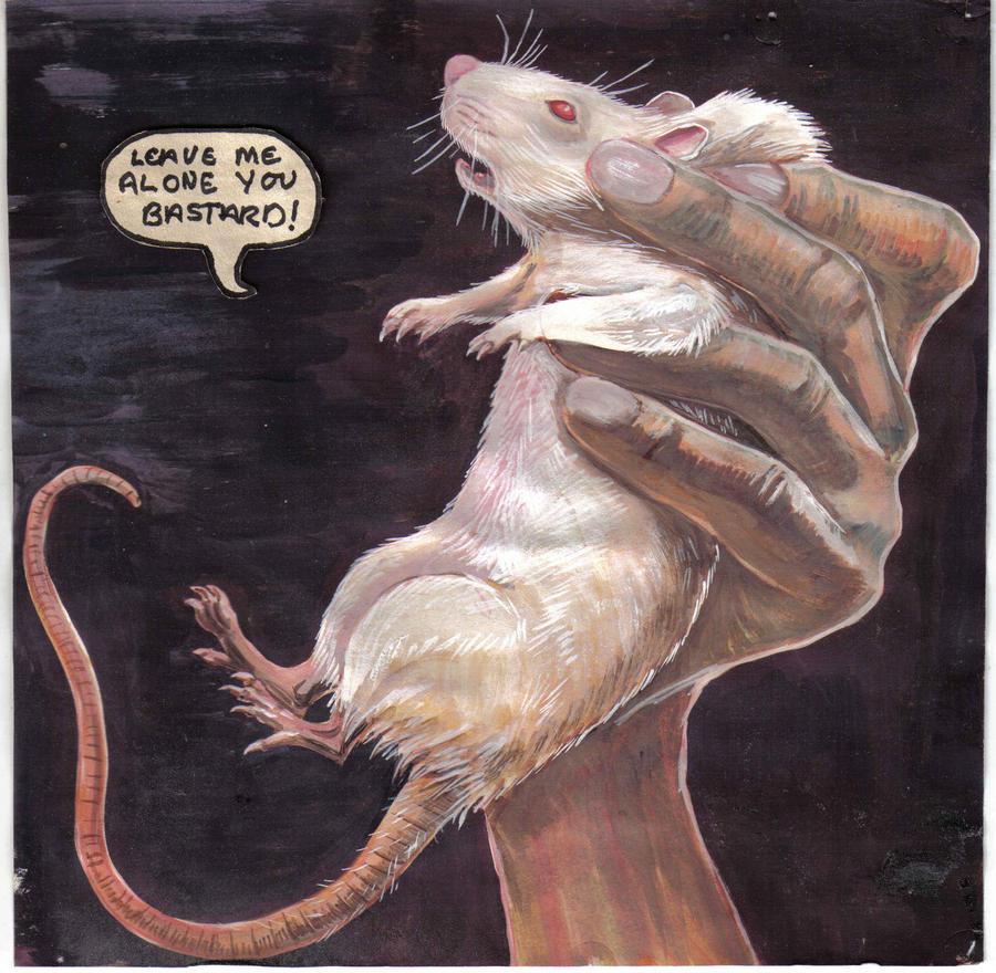 cute rat wallpaper art -#main