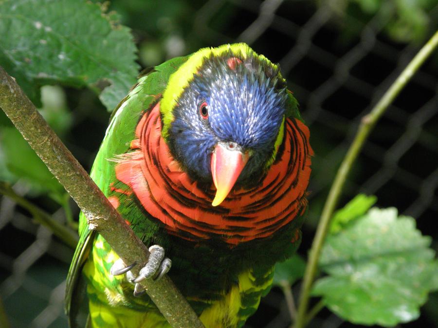 Colorful bird by Canislupuscorax