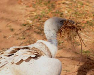 Beak Full of Sticks by Canislupuscorax