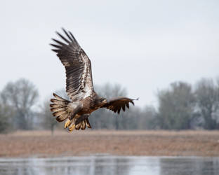 Flyby by Canislupuscorax