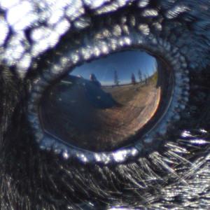 Canislupuscorax's Profile Picture