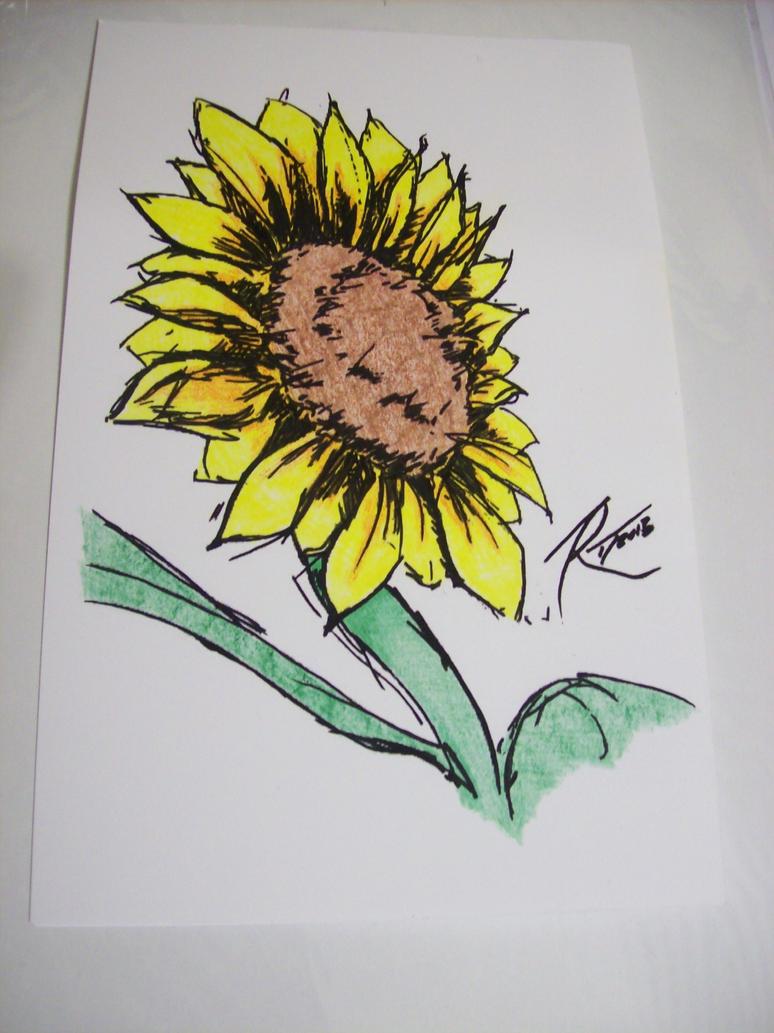 Sunflower by Sashei-Alexandre