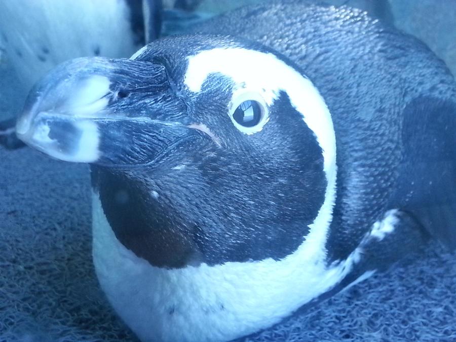 Penguin by TiaothiniaSprite