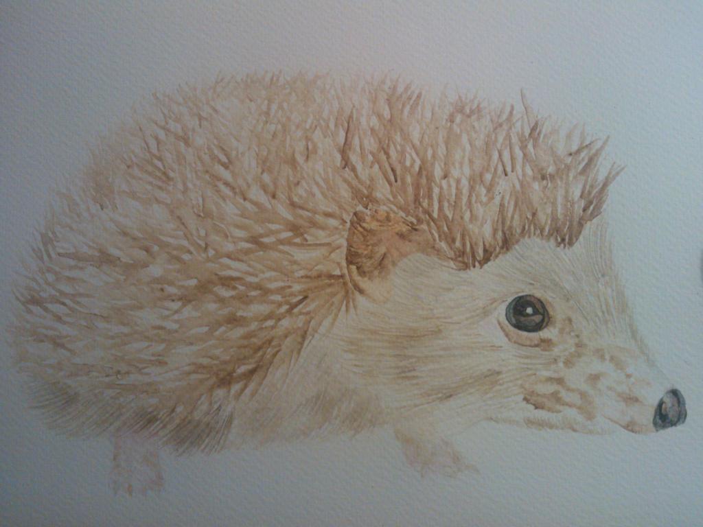 Watercolour Hedgehog by WolfieSpirit9