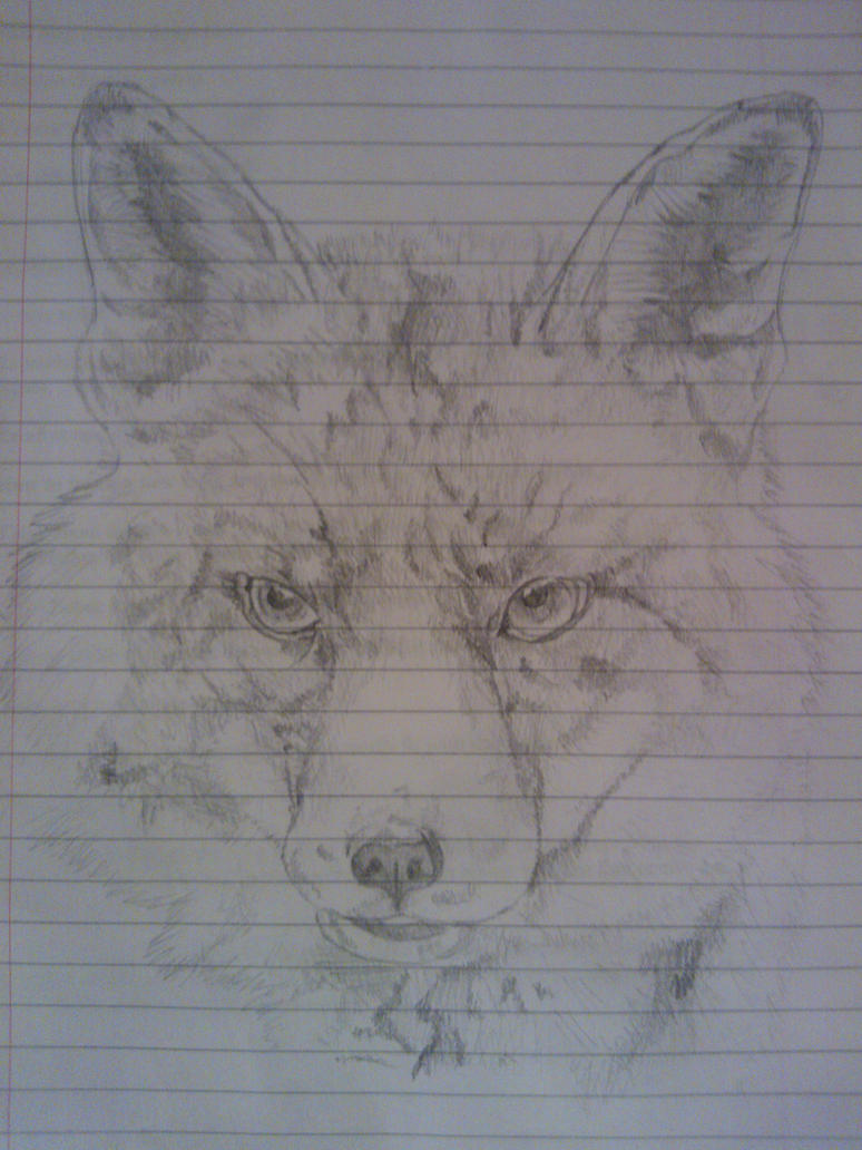 Uni Doodles #4 Fox Sketch by WolfieSpirit9
