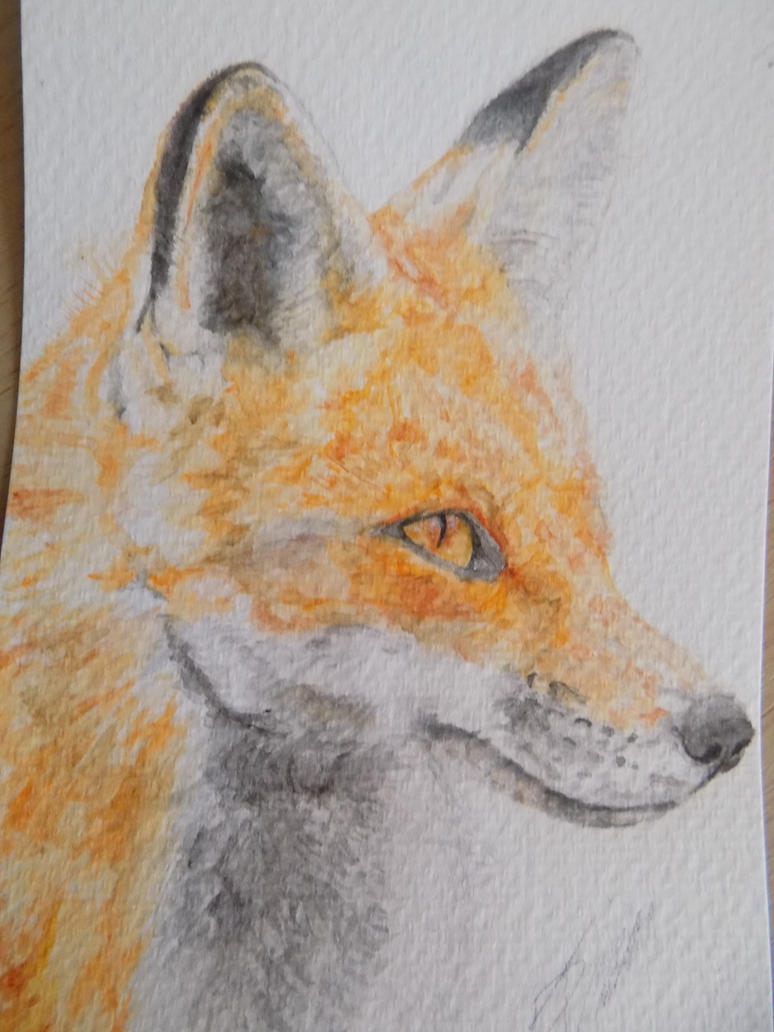 Watercolour Fox #10 by WolfieSpirit9