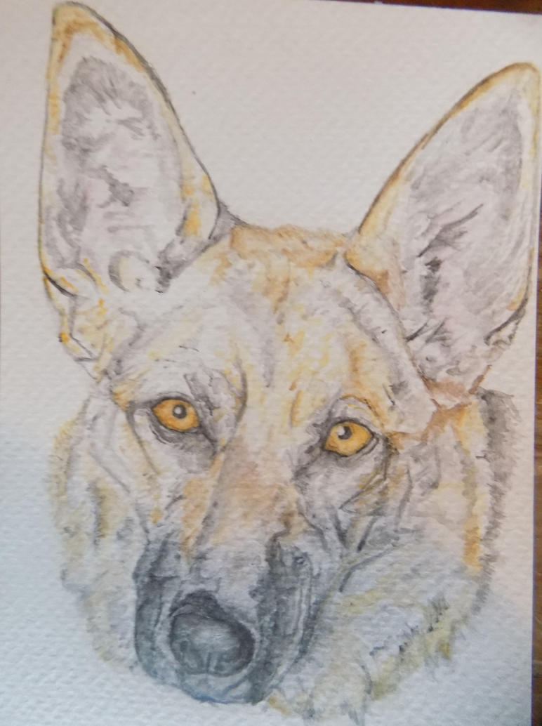 Lucy - Watercolour Alsatian Painting by WolfieSpirit9