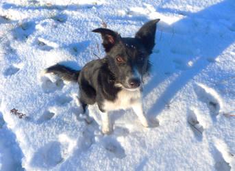Jill In The Snow