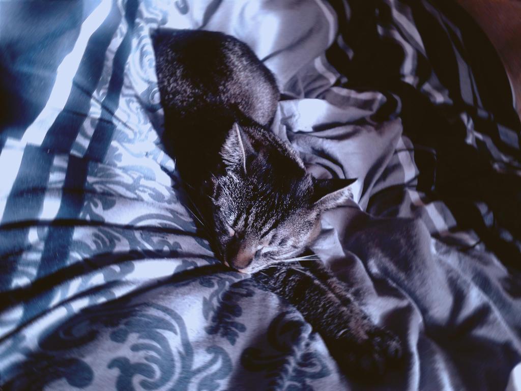 kitty by maskedrav