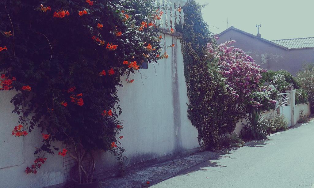flowers by maskedrav