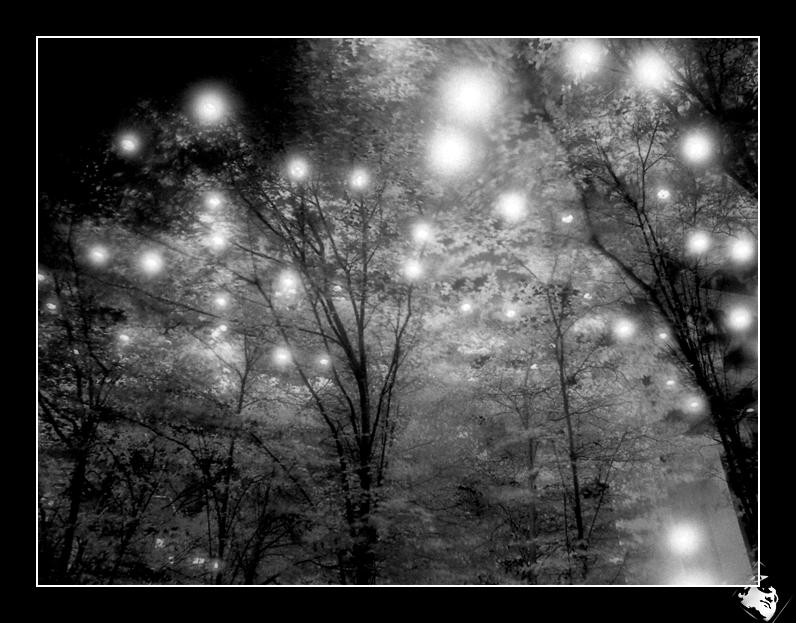 The Lights. by BCereal