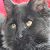 Begging or Guilty kitten emoticon