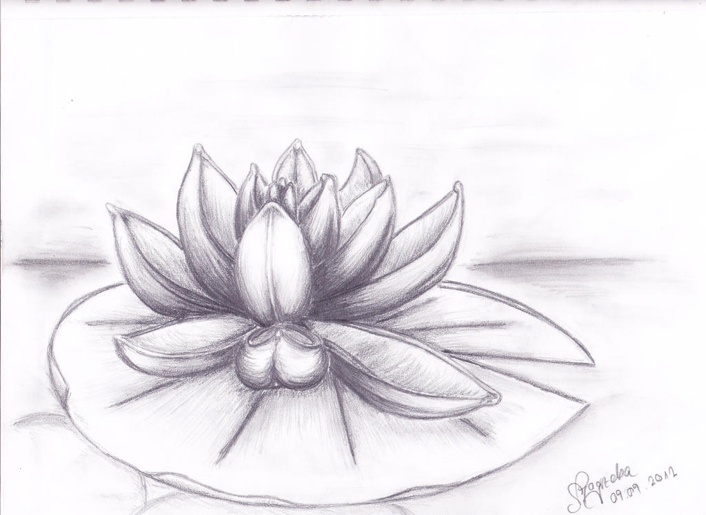 water lily by Sheyana on DeviantArt