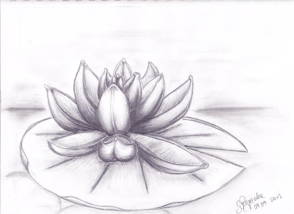 water lily by Sheyana on DeviantArt