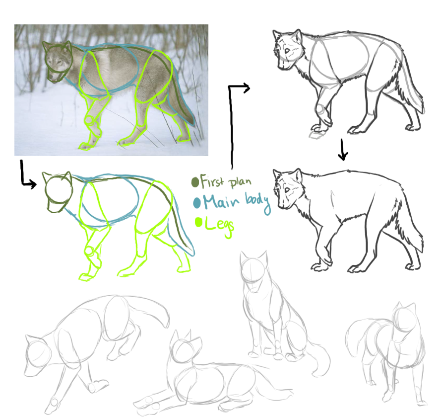Anthro Wolf Tutorial Wolf Mini Tutorial by Laz Kat