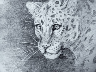 Leopard  by RepaintLife