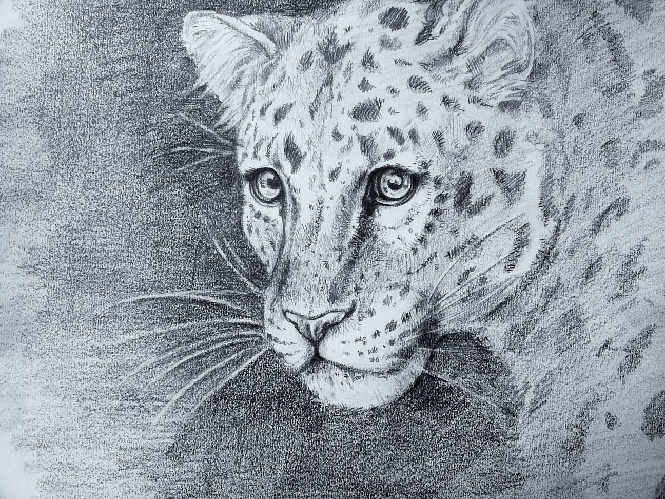 Leopard  by RepaintLife